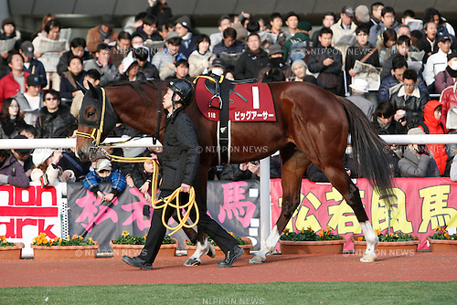 Big Arthur,<br /> DECEMBER 26, 2015 - Horse Racing :<br /> Big Arthur is led through the paddock before the Hanshin Cup at Hanshin Racecourse in Hyogo, Japan. (Photo by Eiichi Yamane/AFLO)