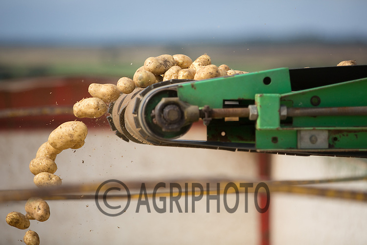 Grading and loading Potatoes.Picture by Tim Scrivener date taken 16th September 2012.mobile 07850 303986 e-mail tim@agriphoto.com.....covering agriculture in The United Kingdom....
