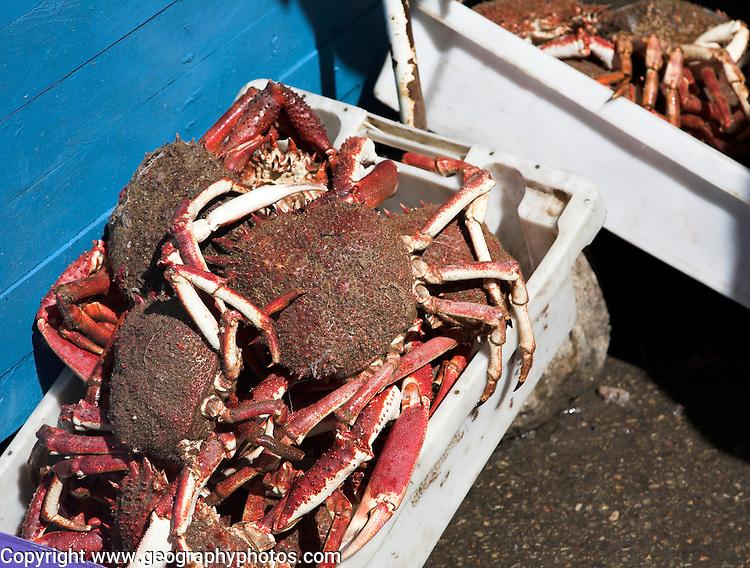 Box of fresh caught crabs Essaouira, Morocco, north Africa