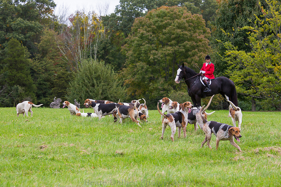 Columbus Day Hunt with the Norfolk Hunt Club
