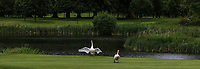Water feature with Swans at the 9th green during Round 1 of the Titleist &amp; Footjoy PGA Professional Championship at Luttrellstown Castle Golf &amp; Country Club on Tuesday 13th June 2017.<br /> Photo: Golffile / Thos Caffrey.<br /> <br /> All photo usage must carry mandatory copyright credit     (&copy; Golffile | Thos Caffrey)