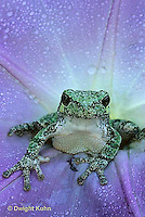Treefrogs - North American