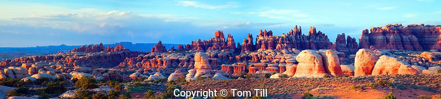 Panorama of Needles spires, Canyonlands National Park, Utah, Needles District, Cedar Mesa sandstone