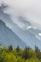 View of the Tongass National Forest near Hyder, Alaska.