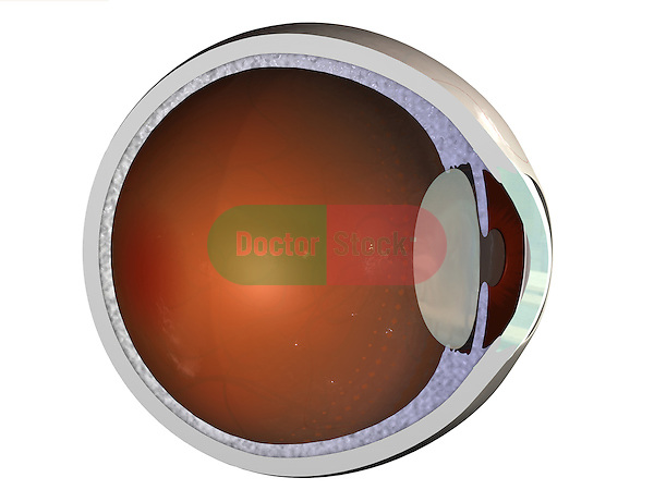 Cross-Section of Eye; this 3d medical image features a cut - away view of the eye revealing the iris, retina and lens.