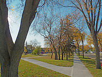 The colors of fall in Edmonton Alberta Canada.