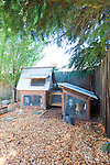 Backyard, urban chicken coop with chickens