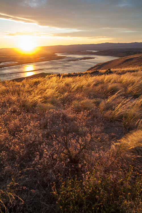 Hanford Reach National Monument, White Bluffs, Wahluke Slope, Columbia River, shrub steppe habitat, grassland, Columbia Basin, Eastern Washington, Washington State, Pacific Northwest, USA,