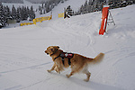 Vail Mountain's Avalanche Rescue Dog, Henry.