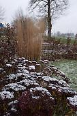 Sneeuw op hemelsleutel (vetkruid - Crassulaceae). Wintertuin van Marrion Hoogenboom, tuinontwerper en hovenier.
