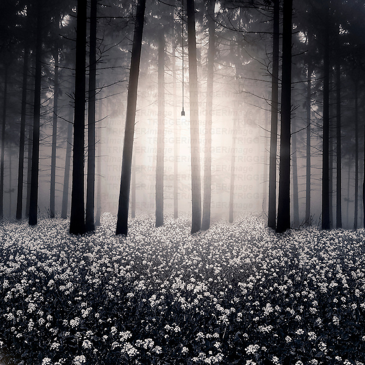 Light bulb illuminating trees in a forest