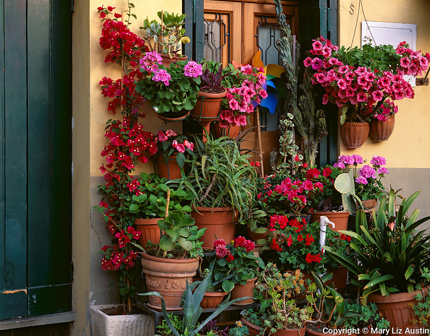 Lucca, Tuscany, Italy<br /> An abundance of flowering potted plants in front of a doorway in Piazza Anfiteatro in the town of Lucca
