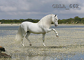 Bob, ANIMALS, collage, horses, photos(GBLA662,#A#) Pferde, caballos