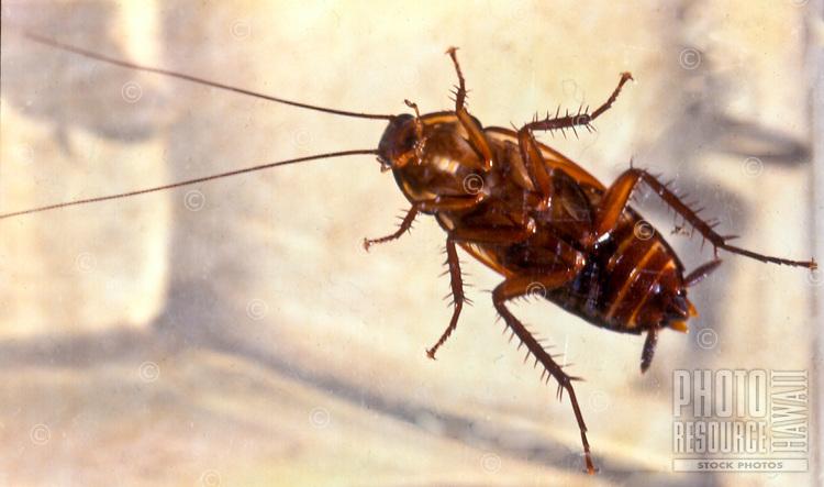 Underside of a large alien cockroach