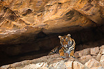 Wild Focus Expeditions India 2017