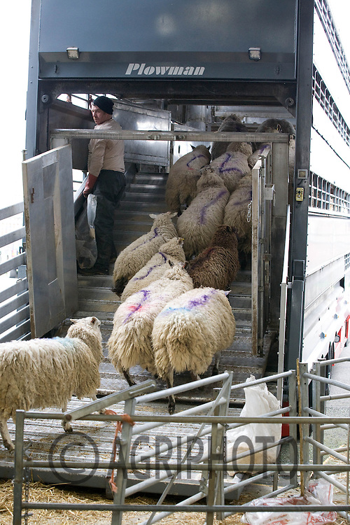 Sheep being loaded on to a livestock transporter in Melton Mowbray Livestock Market.Picture by Tim Scrivener date taken 14th March 2012.mobile 07850 303986 e-mail tim@agriphoto.com.....covering agriculture in The United Kingdom....