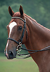 Julie Krone's handsome horse Peter Rabbit, during the 1990s