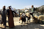 Palestinians trade goats at a local cattle market ahead of Muslim festival of Eid al-Adha, in the West Bank city of Nablus, on October 22, 2012. Muslims around the world prepare to celebrate Eid Al-Adha, which according to the lunar calendar will be celebrated on October 25, by slaughtering goats, sheep, camels and cattle, commemorating Abraham's willingness to sacrifice his son Ismail on God's command. Photo by Nedal Eshtayah