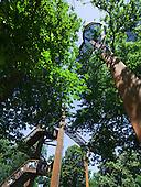 Rhizotron and Xstrata Treetop walkway in the Royal Botanic Gardens, Kew