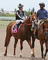HALLANDALE BEACH, FL - JUNE 30:  #8 Pay Any Price (FL) with jockey Edgard Zayas on board, in the post parade before winning the Bob Humphrey Turf Sprint Stakes at Gulfstream Park on June 30, 2018 in Hallandale Beach, Florida. (Photo by Liz Lamont/Eclipse Sportswire/Getty Images)