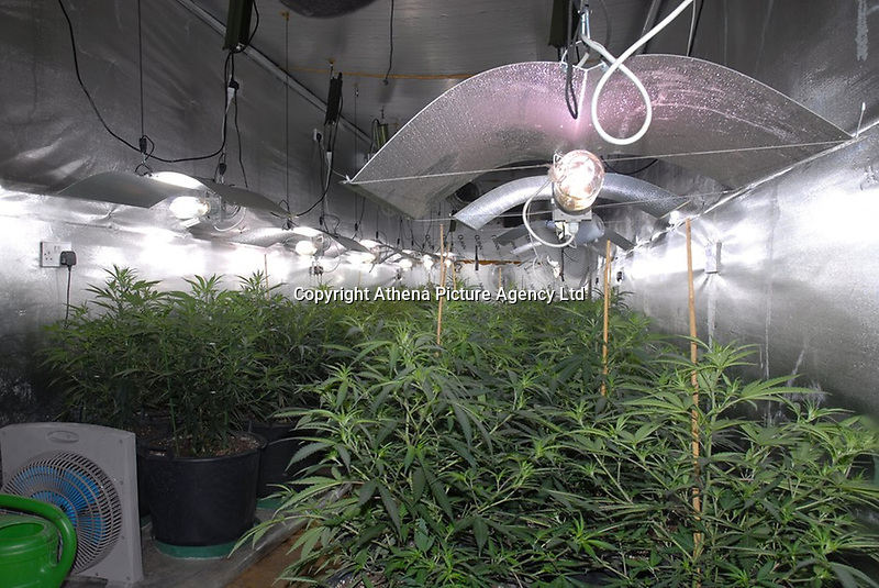 Pictured: The cannabis factory<br /> Re: A drugs gang has been jailed for a total of sixty-two-and-a-half years after South Wales Police disrupted a drugs run from London to Cardiff and uncovered a sophisticated and lucrative criminal operation.<br /> Seven men were sentenced today after they were each convicted of being involved in the supply of Class A and B drugs at previous hearings at Cardiff Crown Court.<br /> The jury heard officers from the force's Organised Crime Unit confronted driver Stuart Jarman at Membury Services on the M4 on March 15th this year – and discovered 2kg of cocaine. Analysis of the Class A drug found it was 80% pure with a street value of £450,000.<br /> Jarman's arrest led officers to six other gang members – as well as a large-scale cannabis factory in Ammanford and another in Waunarlwyd, as well as an illegally-held live handgun.<br /> The following are today starting lengthy sentences after being convicted of conspiracy to supply Class A drugs:<br /> Stuart Jarman, 41, of Garden City, Rhymney, jailed for 6 years;<br /> Lec Gjoka, 42, of Greenwich, London, jailed for 14 years;<br /> Jason Theobald, 42, of Hill Street, Rhymney, jailed for 10 years;<br /> Lyndon Evans, 37, of Wind Street, Ammanford, jailed for nine years;<br /> John Knight, 36, of Pleasant Street, Pentre, jailed for 18 years.<br /> Evans and Knight had also admitted a separate charge of conspiring to supply cannabis, alongside Anthony Vobe, 41, of Garnant, Ammanford, who was jailed for three years for conspiracy to supply cannabis.<br /> A seventh defendant, Richard Phillips, 51, of Barnabas Close, Waunarlwydd, Swansea, was jailed for two-and-a-half years after he pleaded guilty to possessing a firearm whilst banned from doing so due to previous convictions, and conspiracy to produce cannabis. It was at his farm that officers located the firearm and one cannabis factory.<br /> The second cannabis factory was located in Ammanford and – at the time of being raided – had th