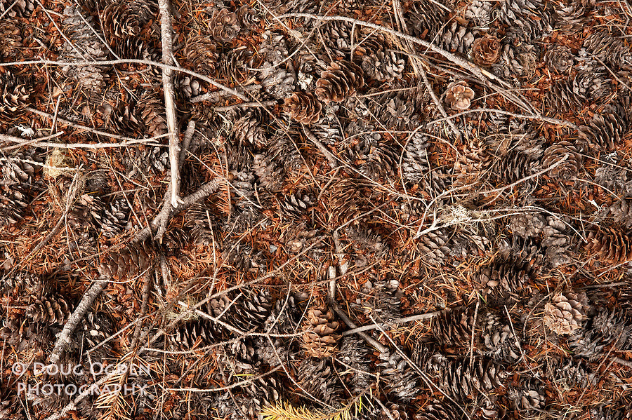 Texture of fir cones collected in a wash