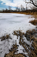 A backwater pond off of the Kankakee River sits frozen in winter at DesPlaines River Fish & Wildlife Area, Will County, Illinois