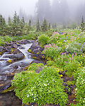 Mount Rainier National Park, WA: Yellow and pink monkey flower, lupine, groundsel, and valerian blooming along the waters of the Paradise River
