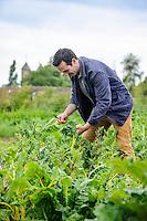 Troy Scott Smith in the Vegetable Garden at Sissinghurst harvesting Chard