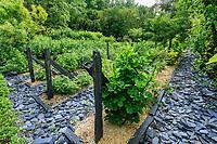France, Indre-et-Loire (37), Amboise, château Gaillard, verger à petits fruits