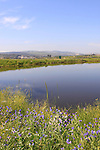 Israel, Lower Galilee, the rain pool near Golani junction