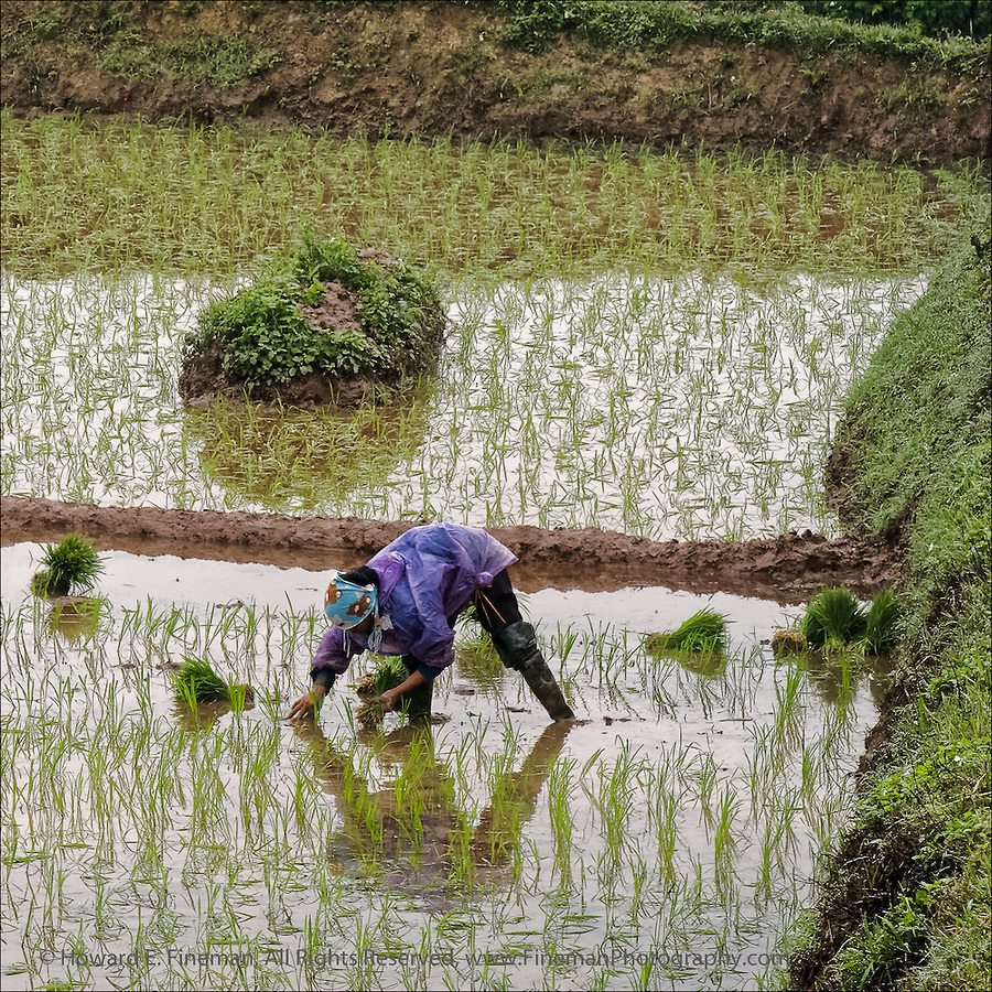 """Woman planting rice in paddy along the highway between Hanoi and Ha Long Bay. The rice in the north is less lush and plentiful than in mid-country and the south. This print was selected for the Newton Open Studios """"Invitational"""" showcasing work of artists who previously received top juror awards."""