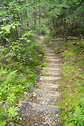 Wooden steps along the Willey Range Trail in the White Mountain National Forest of New Hampshire.