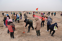Volunteers plant seedlings of sacsaoul in the desert area as part of an afforestation project in Minqin county of northwestern China's Gansu province, 12 March 2017. Minqin county is located in between the Tengger Desert and the Badain Jaran Desert.