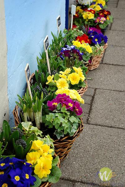 Street floral vendor. Saint Andrews