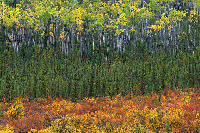 Layers of fall foliage along the foothills of the Tombstone Range, Yukon Territory.