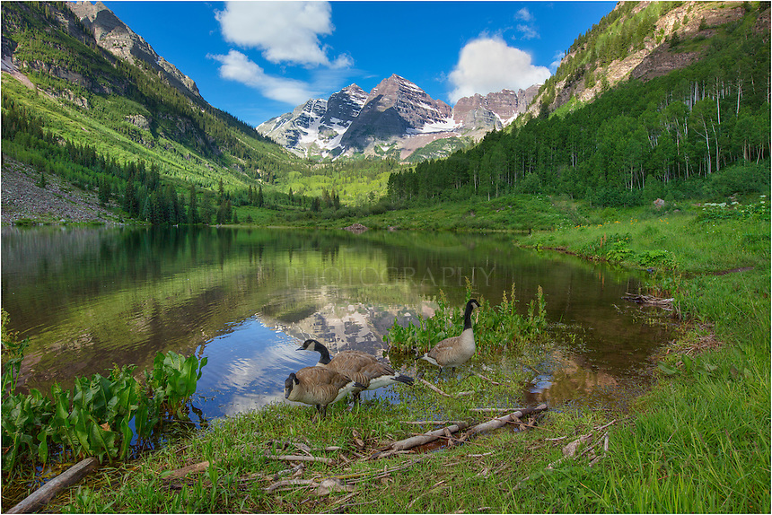 After a pre-dawn walk to Crater Lake in the shadow of the Maroon Bells, I lingered a while on the way back to Maroon Lake to photograph the aspen and other potential Colorado images. As I came up on Maroon Lake, I could help but stop to photograph these Canada Geese. They were very accommodating as I followed them along the shore for a few minutes. Eventually, we parted ways and they swam off across the calm waters.