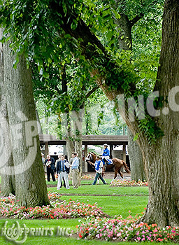 Ponzi Scheme in the paddock before The Joe French Memorial Stakes at Delaware Park on 6/22/11