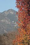 Mt. Wilson and autumn foliage from San Marino