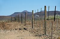 """Zaun der Roten Linie: NAMIBIA, AFRIKA, 12.12.2019: Rote Linie.<br /> Der Zaun verläuft von der Küste im Westen nach Osten bis an die Grenze zu Botswana und entlang dieser. Er wurde kurz nach einem Ausbruch der Rinderpest im Jahr 1897 angedacht, Mitte der 1960er Jahre endgültig errichtet und besteht – in weiten Teilen – bis heute.<br /> Er soll eine unkontrollierte Bewegung von Fleisch, Vieh und tierischen Produkten von Norden nach Süden unterbinden. 1961, als es zu einem starken Ausbruch der Maul- und Klauenseuche im Norden Namibias kam, wurde der Zaun erneut verstärkt. Bis zum Ende der Apartheid mit der Unabhängigkeit Namibias im Jahr 1990, aber auch schon in der deutschen Kolonialzeit, hatte der Zaun jedoch eine weitere Funktion: Die im Norden Namibias lebenden Stämme konnten dadurch leichter vom ansonsten """"weißen"""" Namibia, der Polizeizone, ferngehalten werden. So kam diese """"rote Linie"""" den Südafrikanern bei der Durchsetzung ihrer Homeland-Politik sehr gelegen und bis 1977 durfte kein Ovambo diese Grenze ohne Genehmigung (z. B. in Form eines Arbeitsvertrages) überqueren."""