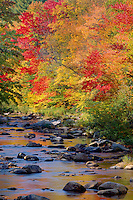 Maples line the Whiteface River<br />    near The Durdin Covered Bridge<br /> Carroll County<br /> New Hampshire