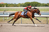 #121Fasig-Tipton Florida Sale,Under Tack Show. Palm Meadows Florida 03-23-2012 Arron Haggart/Eclipse Sportswire.