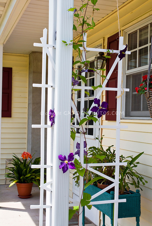 Front Porch With Climbing Clematis Vine On Trellis Window