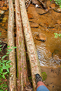 Hiker crossing log bridge at the Notch Brook crossing along the Nancy Pond Trail in the Pemigewasset Wilderness of the New Hampshire White Mountains. Parts of this trail utilizes the railroad bed of the old East Branch & Lincoln Railroad (1893-1948). Update: This log bridge is no longer standing.