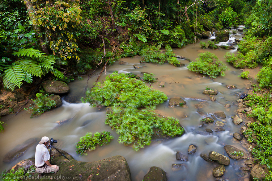 Photographer at tributary of the Maliau River flanked with Riverine Fern {Dipteris lobbiana}. Souhern Plateau of Maliau Basin, Sabah's 'Lost World', Borneo.
