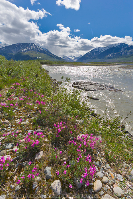 Delta river flows out of the Alaska Range to the north, and into the Tanana river which flows by the town of Delta Junction, Alaska