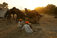 camel owner with saffron colored turbans of rajputs resting at sunset time while camel fair in holy city Pushkar, Rajastan, India