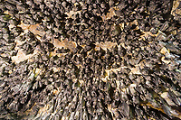 Fruit bats in cave, Queen Elizabeth National Park, Uganda, East Africa