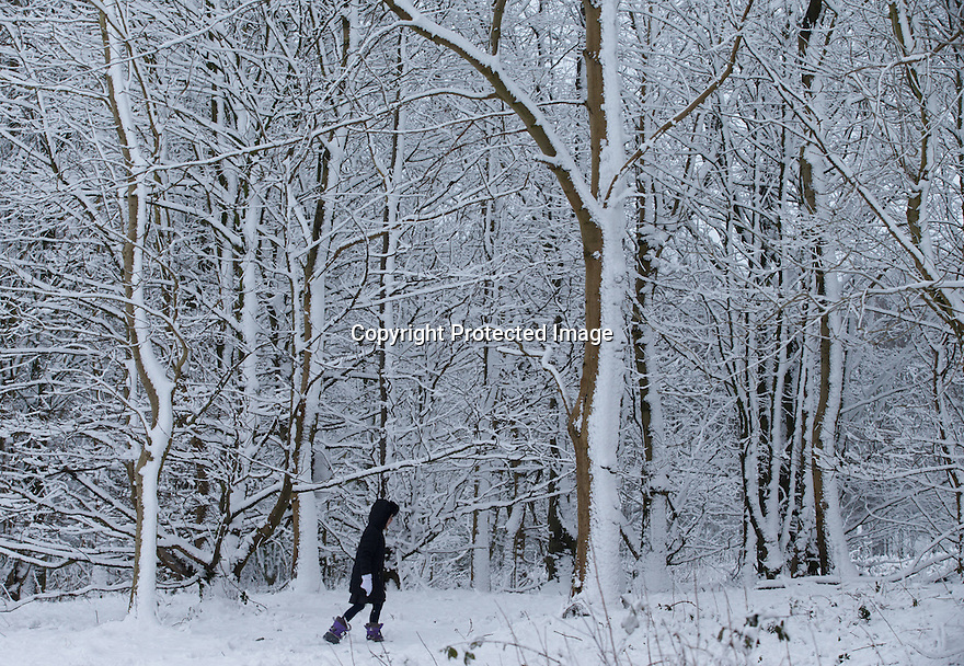 03/02/16<br /> <br /> Eight-year-old Freya Kirkpatrick gets up early, before school, to explore the winter wonderland on Alsop Moor near Ashbourne, after the tail-end of Storm Henry brings overnight snowfall in the Derbyshire Peak District.<br /> <br /> All Rights Reserved: F Stop Press Ltd. +44(0)1335 418365   www.fstoppress.com.