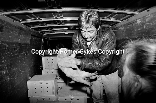 Puppy Farming Wales 1989. Carmarthen, licensed dealer Tony Yeomans operates out of the back of a van and buys pups in at about £50-£60-00 from local breeders, drives overnight to London and then sells them on, to London pet shops and European buyers for two to three times the price he paid, having first visited a local vet where the animals are checked.